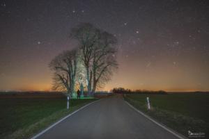 Nachts an der Hohenfelder Linde.