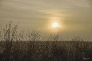 Desenberg im Nebel