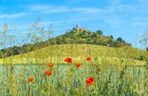 Wildblumen am Desenberg